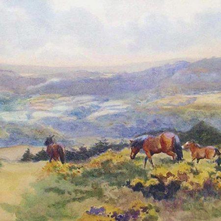 Summer Foal