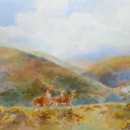 Stag and Hinds on Exmoor