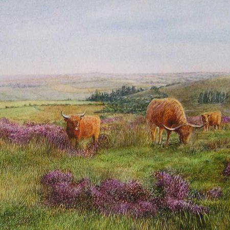 Highland Cattle on Dartmoor